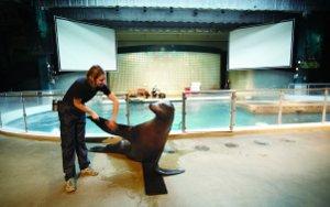 Discount Admission To Mystic Aquarium