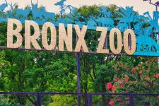 Bronx Zoo Offers Free Admission For Active Duty