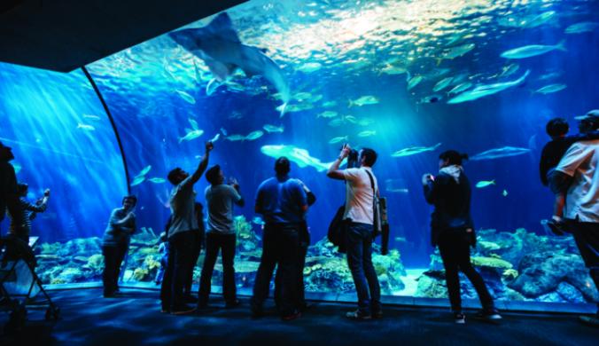 Visit Chicago's undersea kingdom with Big Bus