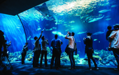 Shedd Aquarium Chicago Offers Military Discount