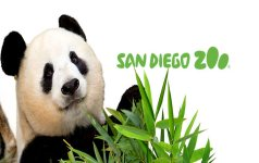 Get a 1-Day Pass from San Diego Zoo